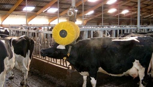 شراء Brosse à vache
