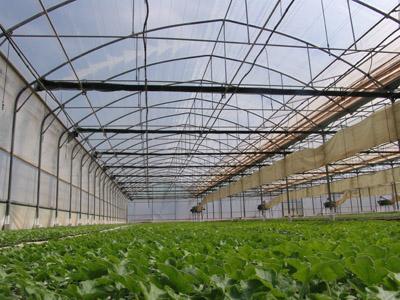 شراء Plants arboricoles, forestiers et d'ornements.