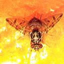 Insecticides MALATOX 50