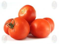 Tomate BOBCAT