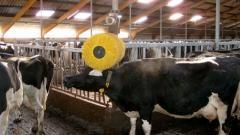 Brosse à vache