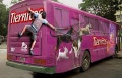 Publicité sur bus