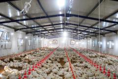 تجهيزات تربية الدواجن system d'alimentation italien de poulet de chair/ dinde
